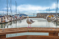 Seagull at Pier 39 Stock Photography