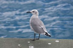Seagull on the Pier Stock Image