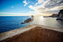 Seagull on the pier, Monaco, France Stock Photo