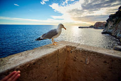 Seagull on the pier, Monaco, France Royalty Free Stock Photo