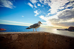 Seagull on the pier, Monaco, France Royalty Free Stock Image