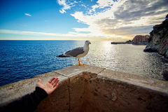 Seagull on the pier, Monaco, France Royalty Free Stock Photos