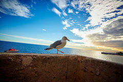 Seagull on the pier, Monaco, France Stock Image