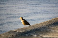 Seagull on pier near the metal net with water ripples on the background stock photos