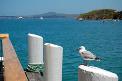 Seagull at pier post Stock Images