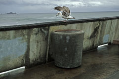 Seagull on Pier Stock Images