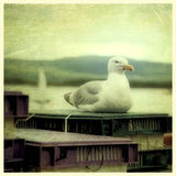 Seagull on a pier Royalty Free Stock Photo
