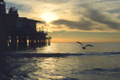Seagull by pier at sunset Stock Images