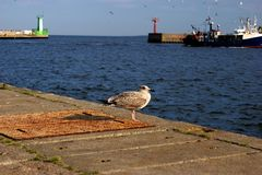The seagull on the pier Royalty Free Stock Photography