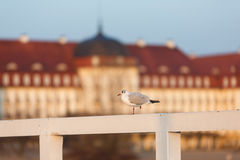 Seagull on the pier Royalty Free Stock Photo
