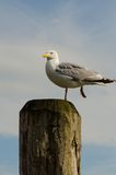 Seagull on a pillar Royalty Free Stock Photos