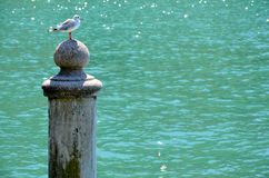 Seagull on pillar royalty free stock photos