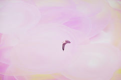 Seagull in pink Stock Photo