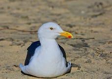 Seagull plaża zdjęcie stock