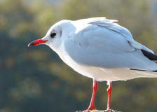 Seagull on a pola Royalty Free Stock Photos