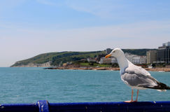 A seagull on a pole in Eastbourne Stock Photography