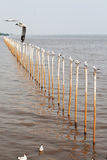 The seagull on the pole. Seagulls stand on a pole in a row royalty free stock photography