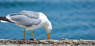 Seagull in the port Royalty Free Stock Photography