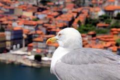 Seagull in Porto Royalty Free Stock Photo