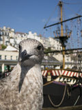 Seagull Portrait Stock Images