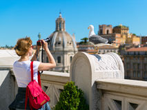 Seagull posing for pictures in the Roman Forum Royalty Free Stock Image