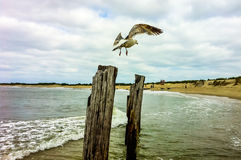 Seagull on post at New Jersey Shore Royalty Free Stock Photography