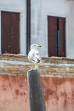 Seagull on Post in Venice Royalty Free Stock Photos