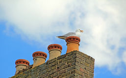 Seagull on pots Stock Photos