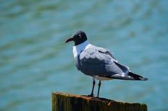 Seagull pozycja na palowaniu zdjęcia stock
