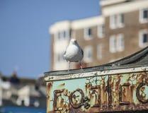 Seagull pozycja na zielonym dachu Zdjęcia Stock