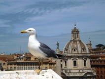 Seagull przy Krajowym zabytkiem zwycięzca Emmanuel, Rzym Obrazy Royalty Free
