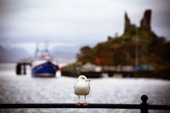 Seagull przy Mohel kasztelem fotografia stock
