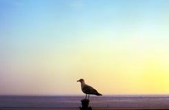 Seagull przy morzem Fotografia Stock