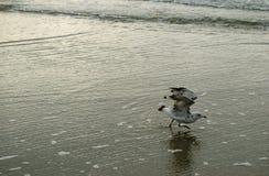 Seagull przy plażą Obrazy Royalty Free