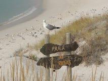 Seagull przy plażą fotografia stock