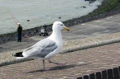 Seagull przy plażą Obraz Stock
