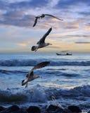 Seagull przy świtem Zdjęcia Stock