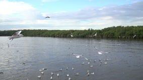 Seagull ptak przy uderzenia pu zbiory