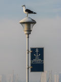 Seagull in Punta del Este Uruguay Stock Photography