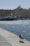 The seagull. Seagull on the quay of the port of Marseilles, south of France Stock Photos