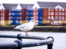 Seagull on railing along waterfront Royalty Free Stock Photo