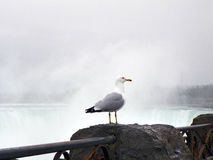 Seagull on railing ledge rock with Niagara Falls mist. Lone seagull stands quietly against the roar of the falls of Niagara River...mist hovering in background stock photo