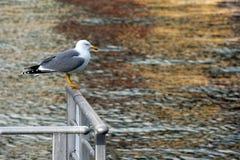 Seagull on a Railing at the Sea Stock Photo