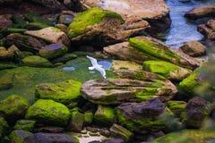 Seagull and reflection along shore Stock Photos