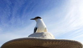 Seagull resting Royalty Free Stock Photos