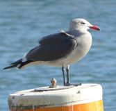 Seagull resting on a buoy. Bird at the beach Royalty Free Stock Photography