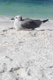 Seagull Resting on Florida Beach by Ocean with Copy-space Stock Photography