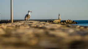 Seagull resting on the port. Stock Photos