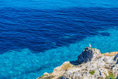 Seagull resting on a rock against blue water on Favignana island in Sicily Royalty Free Stock Photography