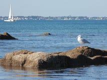 Seagull Rissa tridactyla and sailing ship. In france a seagull Genre Rissa seagull three-legged seagull . Rissa tridactyla; look at a sailboat stock photography